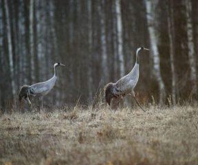 Natourest_Rein+Kuresoo_Animaltour+in+Estland1_visit_estonia_